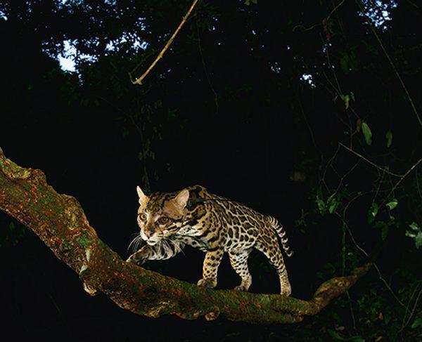 Jungle Spirits - HC